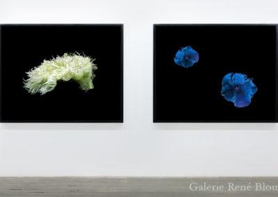 Geneviève Cadieux, Anémone, 2009 2 éléments, édition de 2 127 x 160 x 7 cm / 50 x 63 x 2.75 pouces chaque élément encadré Crédit Photo : Richard-Max Tremblay