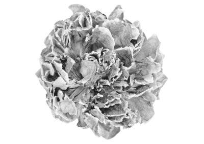Geneviève Cadieux, Fleur exquise, 2006 impression au jet d'encre sur papier chiffon 146 x 184,1 cm 57 1/2 x 72 1/2 pouces, Crédit Photo : Guy L'Heureux