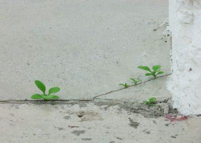 Yoshiro Suda, Weeds, 2016, bois de magnolia et pigments, dimensions variables