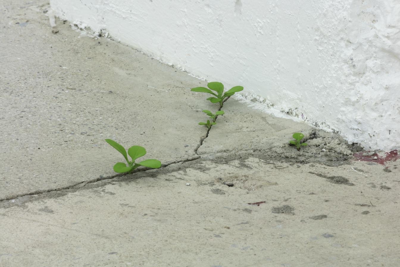 Yoshihiro Suda, Weeds, 2016, bois de magnolia, pigment et médium, dimensions variables, Vue de l'exposition : Yoshihiro Suda & Francine Savard 2016, Crédit photo : Guy L'Heureux