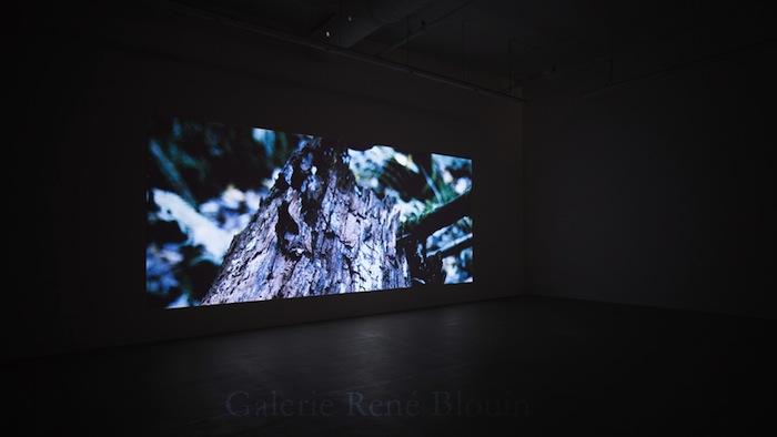 La main du rêve, 2013, vidéo haute définition, son, durée : 45 min. 22 s., Vue de l'exposition: Pascal Grandmaison 12 octobre au 23 novembre 2013, Photo: Pascal Grandmaison