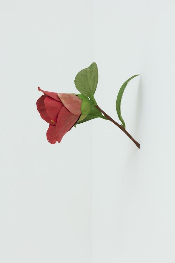 Yoshihiro Suda Camellia, 2016, bois de magnolia, pigment et médium, dimensions variables, Vue de l'exposition : Yoshihiro Suda & Francine Savard 2016, Crédit photo : Guy L'Heureux