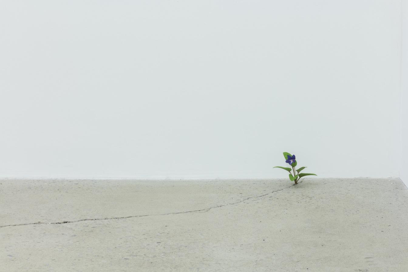 Yoshihiro Suda Violet, 2016, bois de magnolia, pigment et médium, dimensions variables, Vue de l'exposition : Yoshihiro Suda & Francine Savard 2016, Crédit photo : Guy L'Heureux