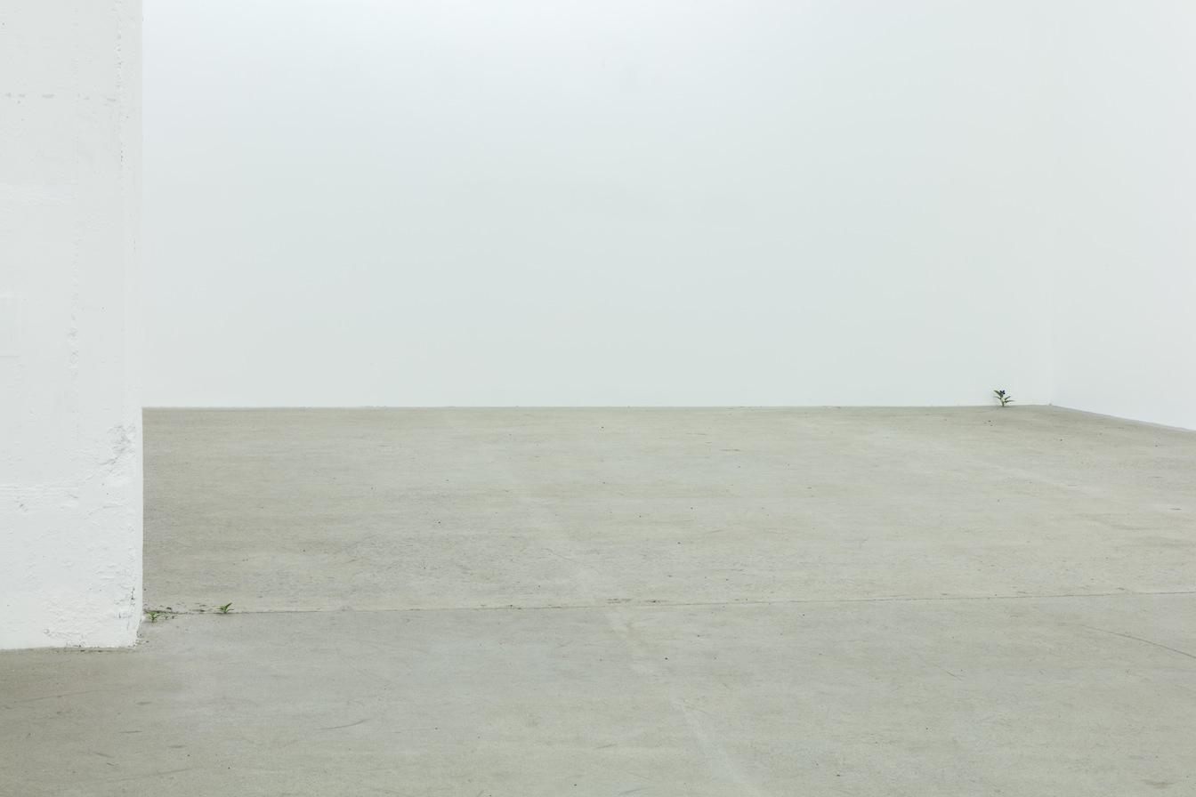 Vue de l'exposition : Yoshihiro Suda & Francine Savard 2016, Crédit photo : Guy L'Heureux