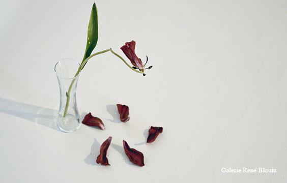 Tulip, 2001 (fleur en vase), bois peint dimensions variables selon le lieu, Yoshihiro Suda, Vue de l'exposition (2009)   Photo: Richard-Max Tremblay