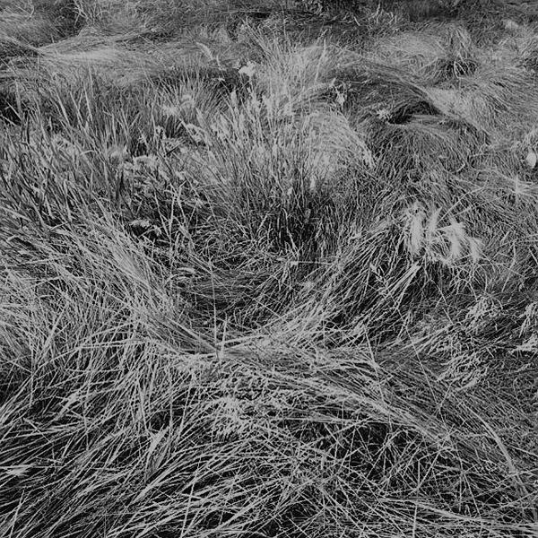 Geoffrey James James Coutt's Garden, Alberta, 2006 édition : 3/10 épreuve argentique à la gélatine 36,4 x 36,9 cm / 14,3 x 14,5 pouces, Jardins, 1er volet, Vue de l'exposition (2009) Photo: Richard-Max Tremblay