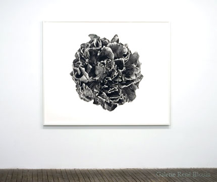 Geneviève Cadieux Fleur exquise (2006) impression à jet d'encre sur papier chiffon 146 x 184,1 cm, Jardins, 1er volet, Vue de l'exposition (2009) Photo: Richard-Max Tremblay