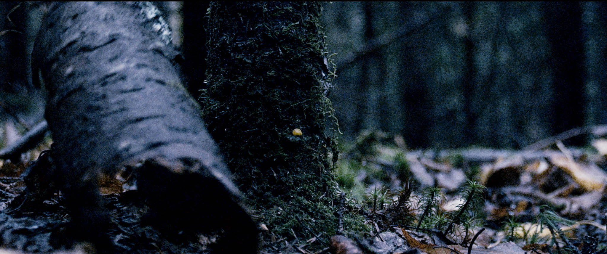 Pascal Grandmaison, La main du rêve, 2013, vidéo HD et son, 45m 22s