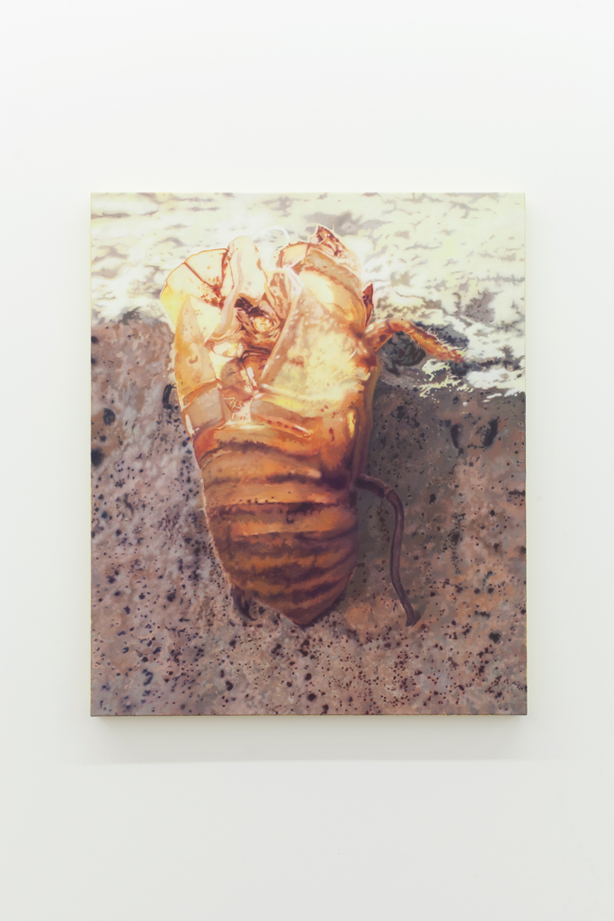 Nicolas Lachance, Cicadas, 2018, Huile et acrylique sur toile, 91,4 x 76,2 cm / 36  x 30 pouces