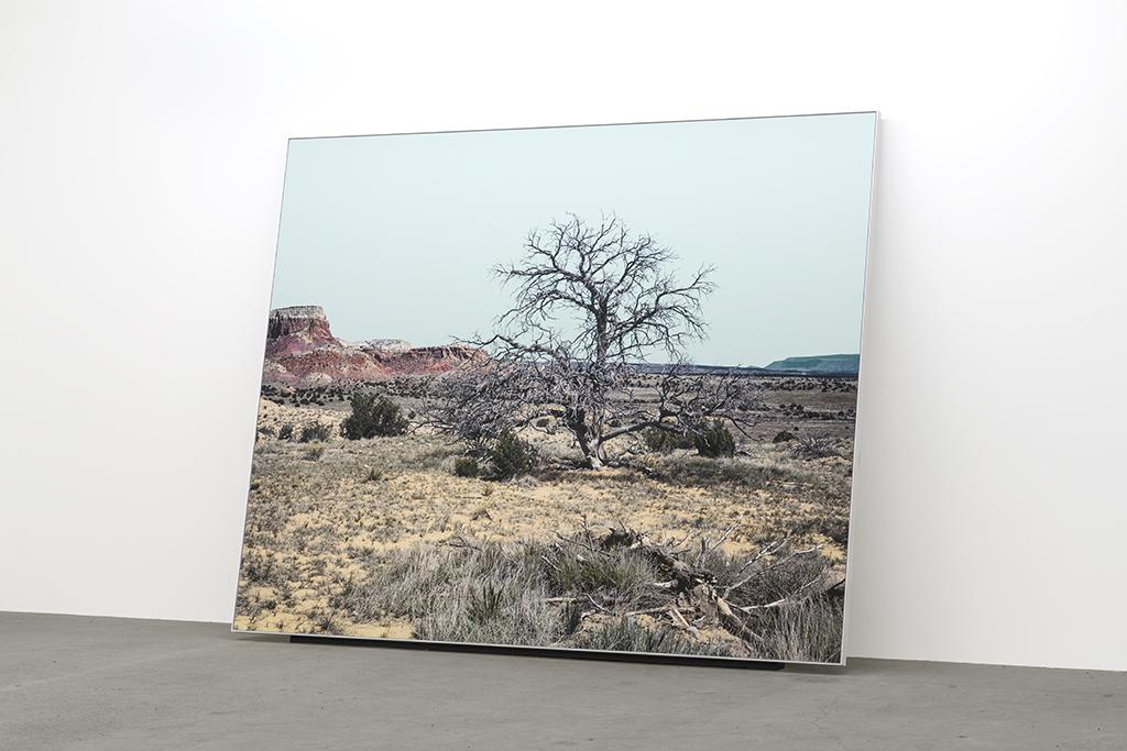 Geneviève Cadieux, Arbre seul (le jour), 2018, Impression au jet d'encre sur papier chiffon, rehaussée à la feuille d'or, 8 x 10 pieds