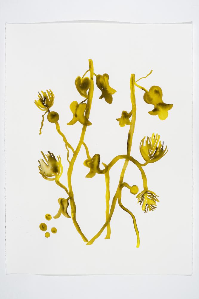 Serge Murphy, Illuminations 17, 2018, Encre sur papier Arches, 77 x 55 cm